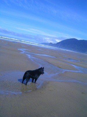 This man's best friend, Winkie the Wonder Dog