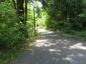 One of the many secluded trails at Evergreen State, College, where Donna Manson was abducted by Ted Bundy on March 12, 1974