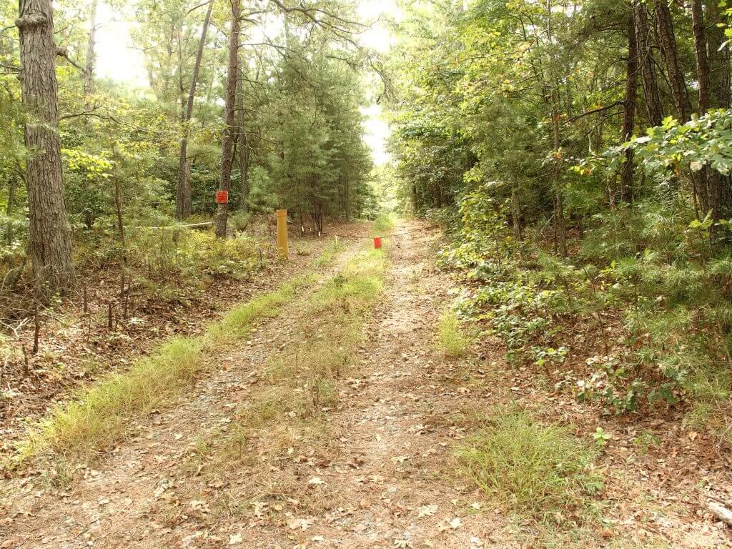 Phelps Lauer Logging Trail