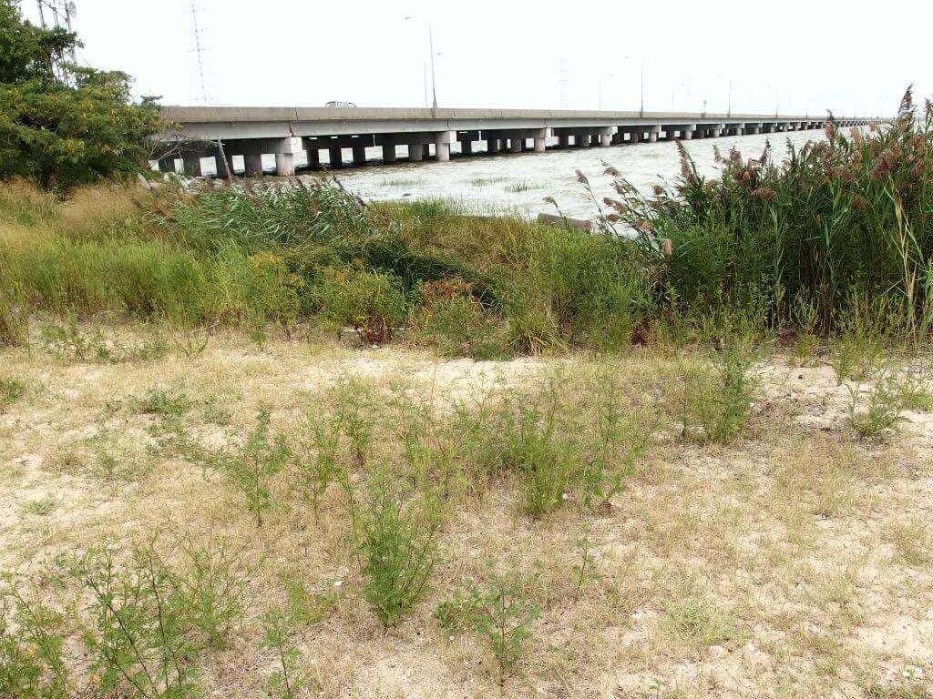 Ragged Island at James Bridge